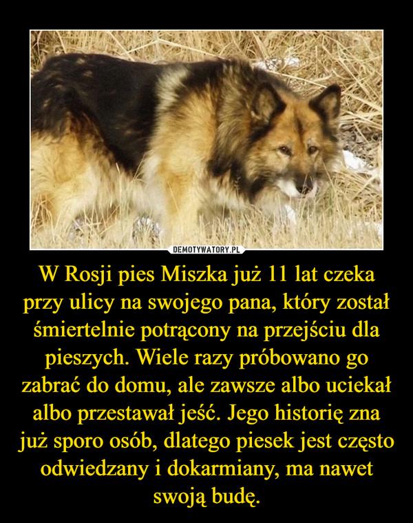 W Rosji pies Miszka już 11 lat czeka przy ulicy na swojego pana, który został śmiertelnie potrącony na przejściu dla pieszych. Wiele razy próbowano go zabrać do domu, ale zawsze albo uciekał albo przestawał jeść. Jego historię zna już sporo osób, dlatego piesek jest często odwiedzany i dokarmiany, ma nawet swoją budę. –