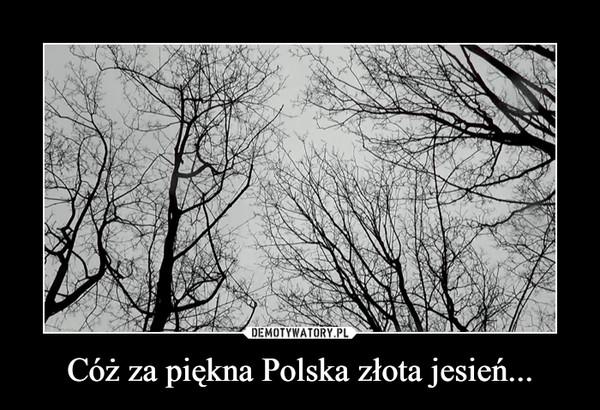 Cóż za piękna Polska złota jesień... –