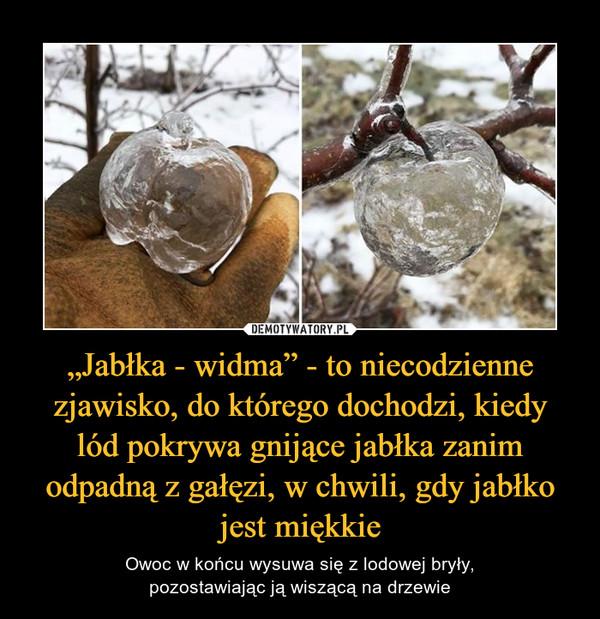 """""""Jabłka - widma"""" - to niecodzienne zjawisko, do którego dochodzi, kiedylód pokrywa gnijące jabłka zanim odpadną z gałęzi, w chwili, gdy jabłko jest miękkie – Owoc w końcu wysuwa się z lodowej bryły,pozostawiając ją wiszącą na drzewie"""