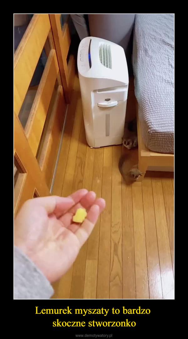Lemurek myszaty to bardzo skoczne stworzonko –