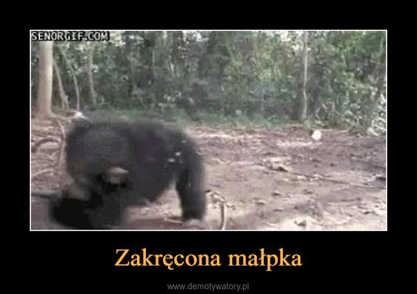 Zakręcona małpka –