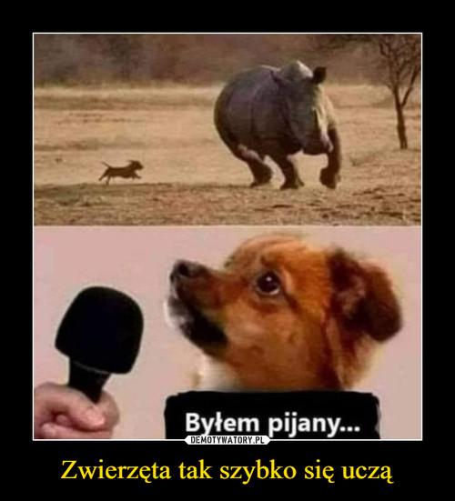 Zwierzęta tak szybko się uczą