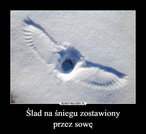 Ślad na śniegu zostawiony przez sowę