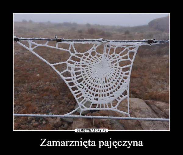 Zamarznięta pajęczyna –