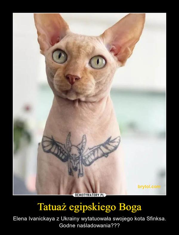 Tatuaż egipskiego Boga – Elena Ivanickaya z Ukrainy wytatuowała swojego kota Sfinksa. Godne naśladowania???