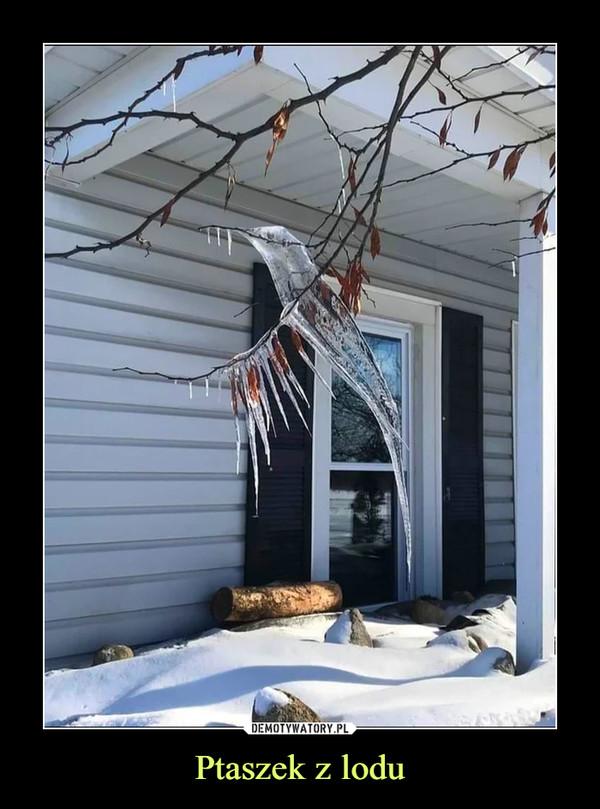 Ptaszek z lodu –