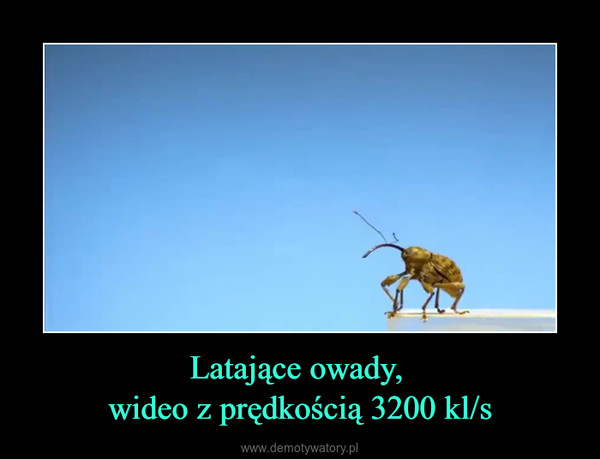 Latające owady, wideo z prędkością 3200 kl/s –