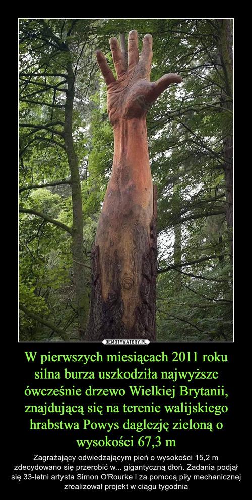W pierwszych miesiącach 2011 roku silna burza uszkodziła najwyższe ówcześnie drzewo Wielkiej Brytanii, znajdującą się na terenie walijskiego hrabstwa Powys daglezję zieloną o wysokości 67,3 m