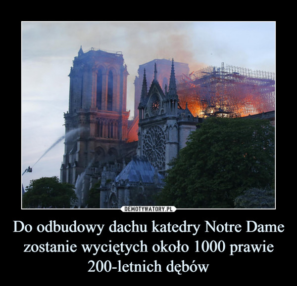 Do odbudowy dachu katedry Notre Dame zostanie wyciętych około 1000 prawie 200-letnich dębów –