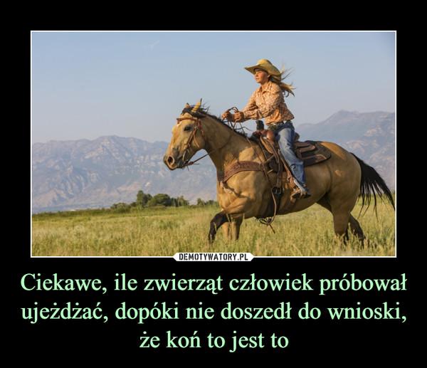 Ciekawe, ile zwierząt człowiek próbował ujeżdżać, dopóki nie doszedł do wnioski, że koń to jest to –
