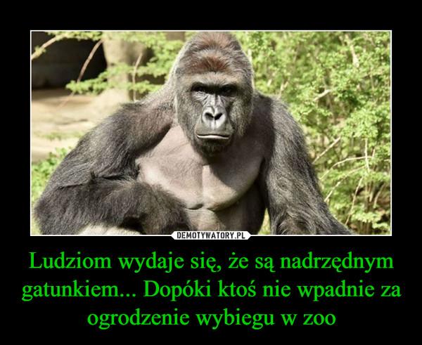 Ludziom wydaje się, że są nadrzędnym gatunkiem... Dopóki ktoś nie wpadnie za ogrodzenie wybiegu w zoo –