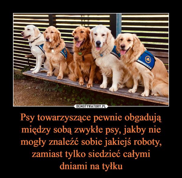 Psy towarzyszące pewnie obgadują między sobą zwykłe psy, jakby nie mogły znaleźć sobie jakiejś roboty, zamiast tylko siedzieć całymidniami na tyłku –