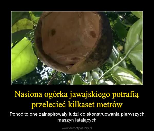 Nasiona ogórka jawajskiego potrafią przelecieć kilkaset metrów – Ponoć to one zainspirowały ludzi do skonstruowania pierwszych maszyn latających