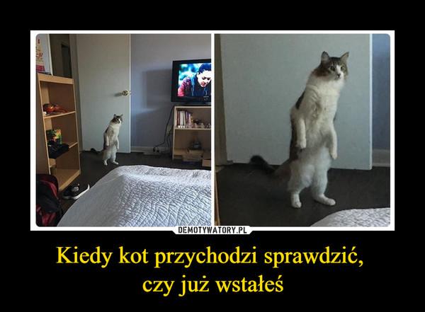 Kiedy kot przychodzi sprawdzić, czy już wstałeś –