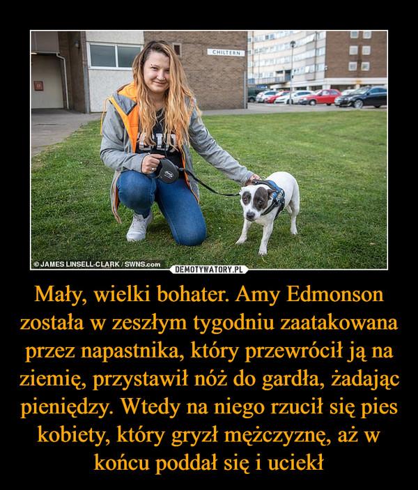 Mały, wielki bohater. Amy Edmonson została w zeszłym tygodniu zaatakowana przez napastnika, który przewrócił ją na ziemię, przystawił nóż do gardła, żadając pieniędzy. Wtedy na niego rzucił się pies kobiety, który gryzł mężczyznę, aż w końcu poddał się i uciekł –