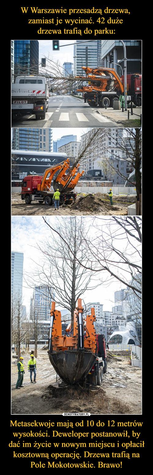 W Warszawie przesadzą drzewa,  zamiast je wycinać. 42 duże  drzewa trafią do parku: Metasekwoje mają od 10 do 12 metrów wysokości. Deweloper postanowił, by dać im życie w nowym miejscu i opłacił kosztowną operację. Drzewa trafią na Pole Mokotowskie. Brawo!