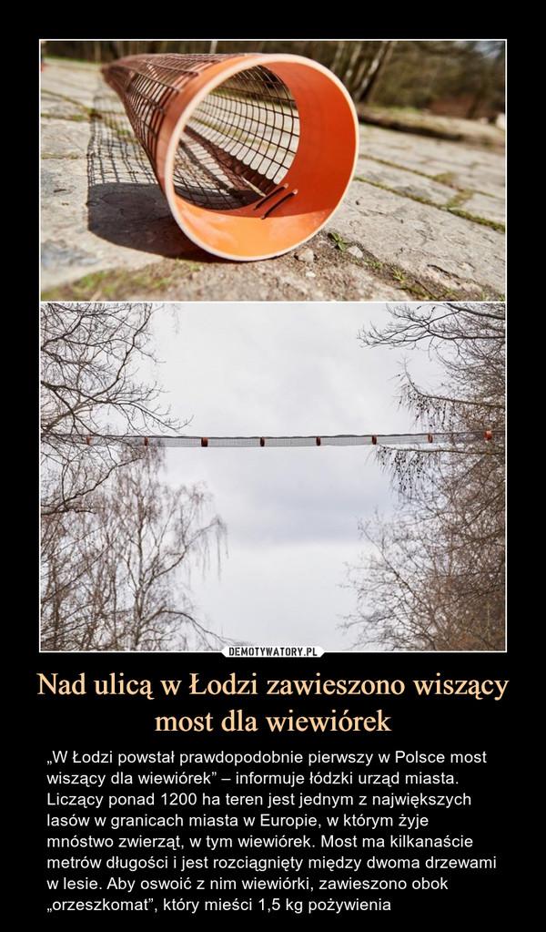 """Nad ulicą w Łodzi zawieszono wiszący most dla wiewiórek – """"W Łodzi powstał prawdopodobnie pierwszy w Polsce most wiszący dla wiewiórek"""" – informuje łódzki urząd miasta.Liczący ponad 1200 ha teren jest jednym z największych lasów w granicach miasta w Europie, w którym żyje mnóstwo zwierząt, w tym wiewiórek. Most ma kilkanaście metrów długości i jest rozciągnięty między dwoma drzewami w lesie. Aby oswoić z nim wiewiórki, zawieszono obok """"orzeszkomat"""", który mieści 1,5 kg pożywienia"""
