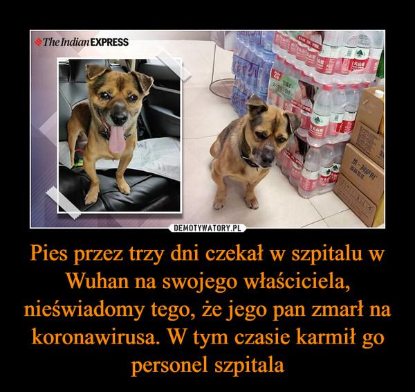 Pies przez trzy dni czekał w szpitalu w Wuhan na swojego właściciela, nieświadomy tego, że jego pan zmarł na koronawirusa. W tym czasie karmił go personel szpitala –