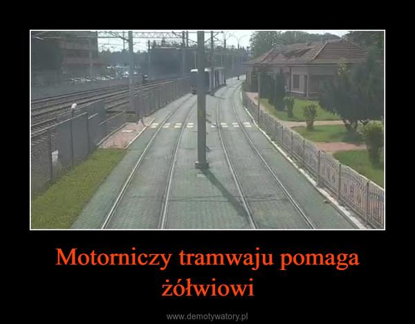 Motorniczy tramwaju pomaga żółwiowi –