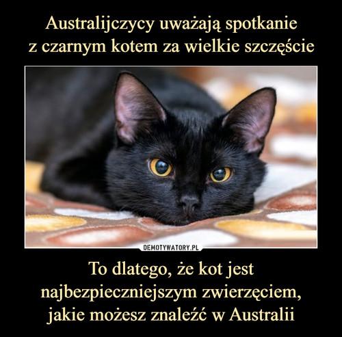Australijczycy uważają spotkanie z czarnym kotem za wielkie szczęście To dlatego, że kot jest najbezpieczniejszym zwierzęciem, jakie możesz znaleźć w Australii