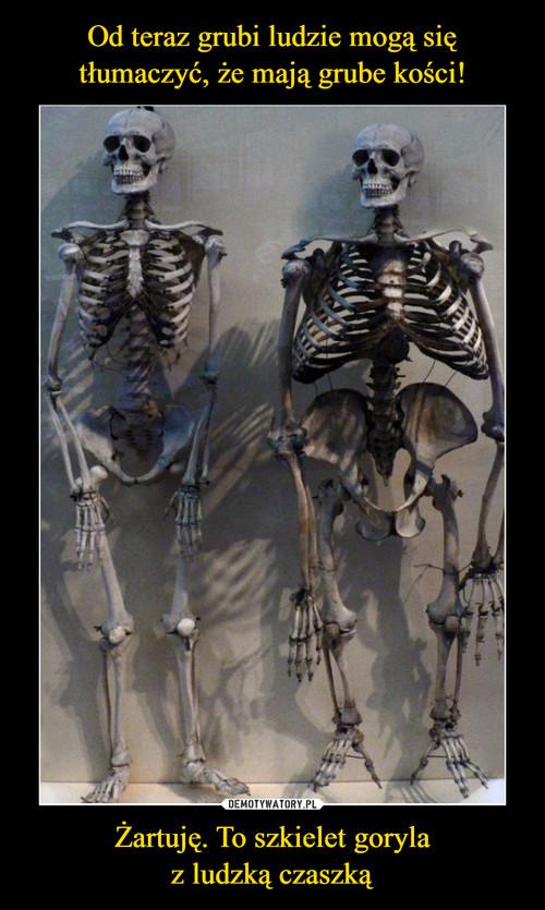 Od teraz grubi ludzie mogą się tłumaczyć, że mają grube kości! Żartuję. To szkielet goryla z ludzką czaszką
