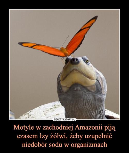 Motyle w zachodniej Amazonii piją czasem łzy żółwi, żeby uzupełnić niedobór sodu w organizmach