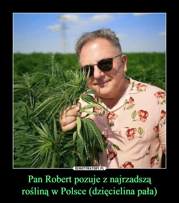 Pan Robert pozuje z najrzadsząrośliną w Polsce (dzięcielina pała) –