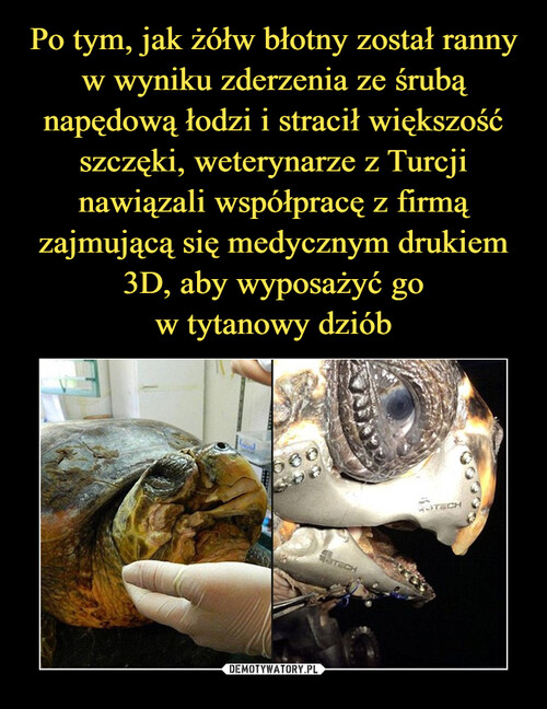 Po tym, jak żółw błotny został ranny w wyniku zderzenia ze śrubą napędową łodzi i stracił większość szczęki, weterynarze z Turcji nawiązali współpracę z firmą zajmującą się medycznym drukiem 3D, aby wyposażyć go w tytanowy dziób