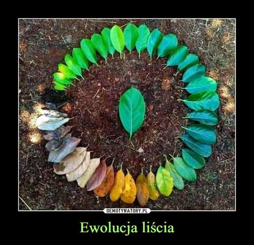 Ewolucja liścia