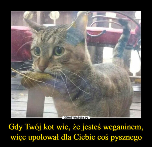 Gdy Twój kot wie, że jesteś weganinem, więc upolował dla Ciebie coś pysznego